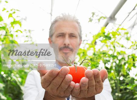 Portrait of scientist holding ripe tomato in greenhouse