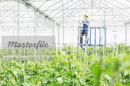 Worker adjusting sprinklers in greenhouse