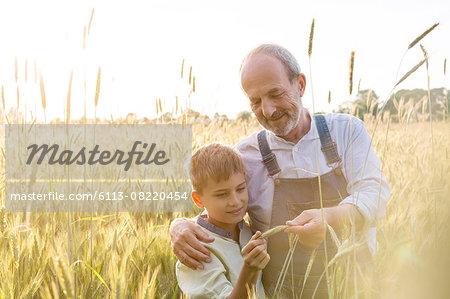 Farmer grandfather and grandson examining rural wheat crop