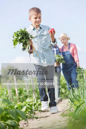 Boy carrying harvested vegetables in sunny garden