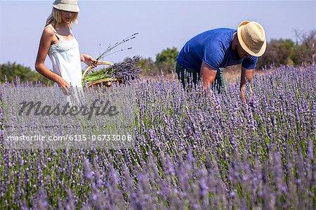 Young Couple In Lavender Field, Croatia, Dalmatia, Europe