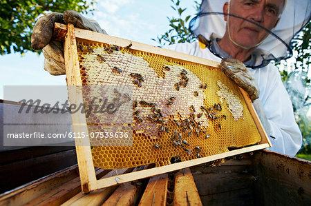 Beekeeper Holding Honeycomb In Garden, Croatia, Europe
