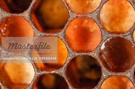 Honeycomb, (Apis mellifera),Croatia, Europe
