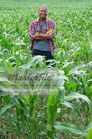 A man standing in a field of corn, on an organic farm.