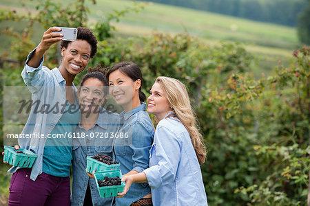 Picking blackberry fruits on an organic farm. Four women posing for a selfy photograph, taken using a smart phone.
