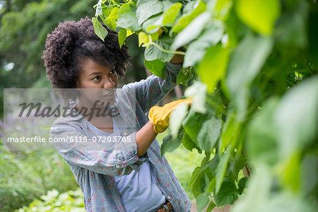 A woman picking green beans in a vegetable garden.