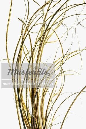 Detail of ornamental grasses on white background