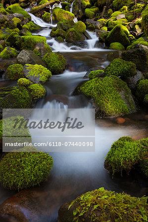Rainforest stream, Olympic National Park, Washington