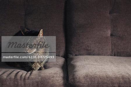 A cat sitting on a grey sofa.