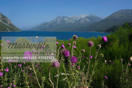 Mountain lake with wild flowers, Ruta de los Siete Lagos, Argentina, South America