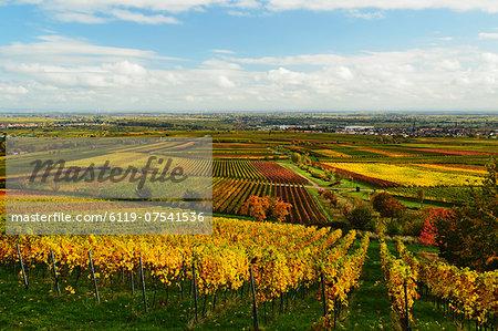 Vineyard landscape, near St. Martin, German Wine Route, Rhineland-Palatinate, Germany, Europe