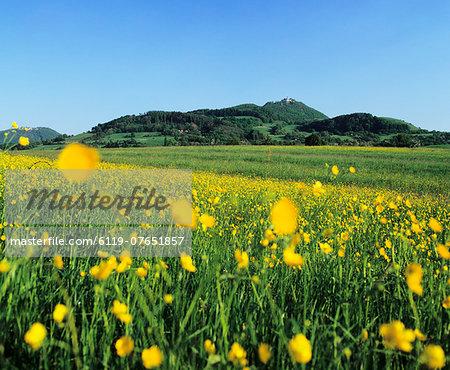 View from a flower meadow to Teckberg Mountain with Teck Castle, Kirchheim, Swabian Alb, Baden Wurttemberg, Germany, Europe
