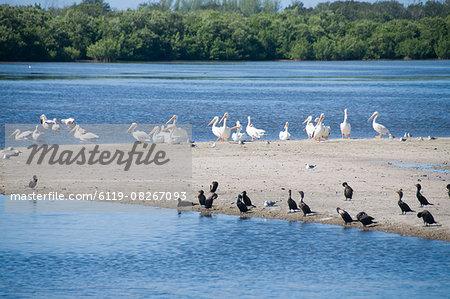 "J.N. ""Ding"" Darling Wildlife Reserve, Sanibel Island, Gulf Coast, Florida, United States of America, North America"