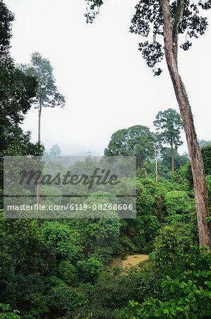 Rainforest, Sepilok Rainforest Discovery Center, Sabah, Borneo, Malaysia, Southeast Asia, Asia