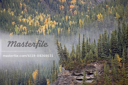 Fog and fall colors, Alaska Highway, British Columbia, Canada, North America