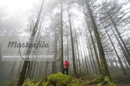 Walking in Beddgelert forest in Snowdonia, Wales, United Kingdom, Europe