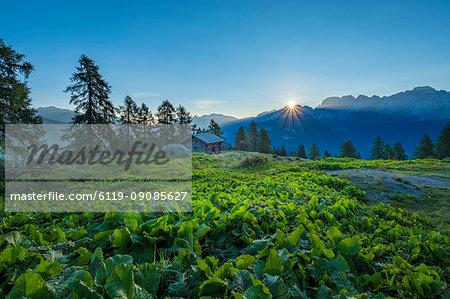 Brenta mountain range at sunrise, Rendena Valley, Trentino, Italy, Europe