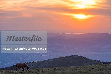 Horse in the fields, Mount Subasio, Umbria, Italy, Europe