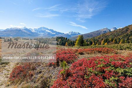 Val Vezzola during autumn, Valdidentro, Valtellina, Sondrio province, Lombardy, Italy, Europe