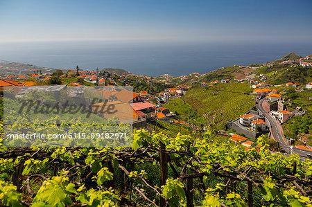 View of vineyard, countryside and Atlantic Ocean near Cabo Girao, Camara de Lobos, Madeira, Portugal, Atlantic, Europe