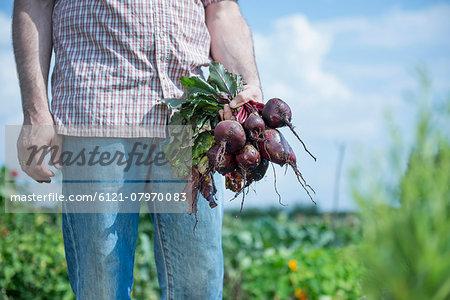 Man holding bunch beetroot garden harvest