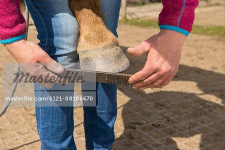 Horse's hoof manicure, Bavaria, Germany