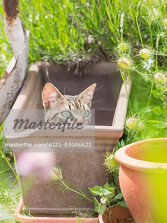 Domestic cat lying in an empty plant pot