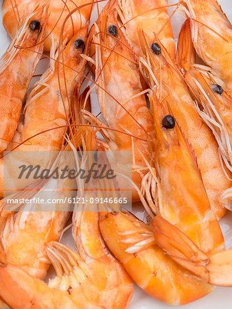 Close-up of fresh prawns