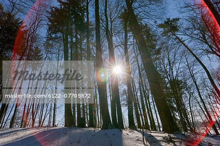 Sun shining through snowy forest