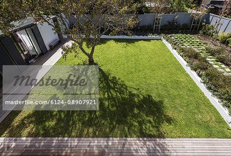 Tree casting shadow in sunny luxury yard