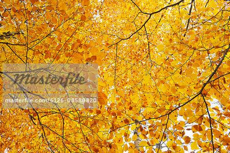 Sweden, Uppland, Lidingo, Autumn leaves