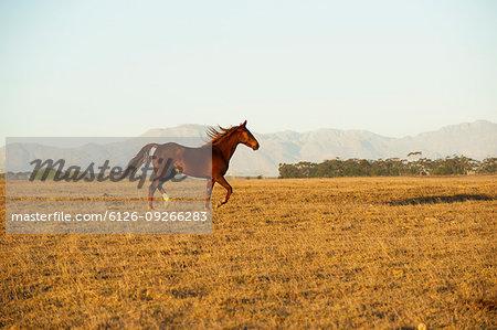 Brown horse in field