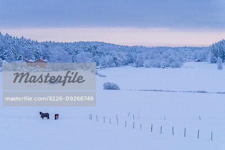 Horses in snowy field