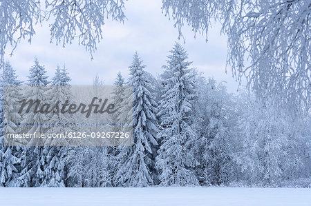 Snow covered forest in Kilsbergen, Sweden