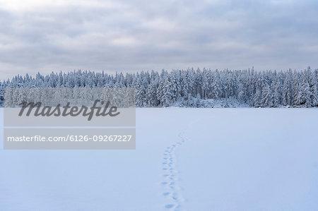 Footprints in snow by forest in Kilsbergen, Sweden