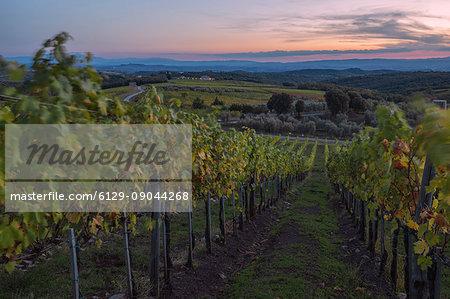 Tuscan landscape from Chianti vineyards surrounding Castelnuovo Berardenga during sunset. Castelnuovo Berardenga, Chianti, Siena province, Tuscany, Italy, Europe
