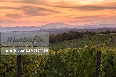 Mount Amiata (Monte Amiata) from Chianti vineyards during sunset. San Felice,Castelnuovo Berardenga, Chianti, Siena province, Tuscany, Italy, Europe