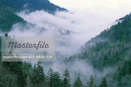 Morton Trees, Great Smoky Mountains, Tennessee, USA