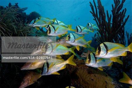 Schooling fish on wreckage.
