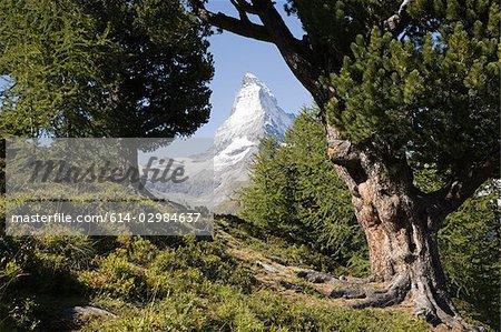 Matterhorn through trees