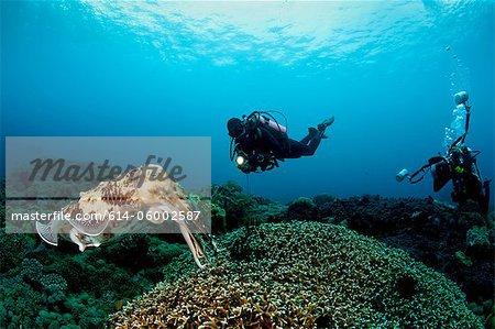 Scuba Diving in Buyat Bay