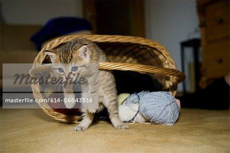 Kittens hanging on basket handle