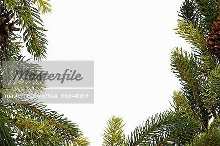 Christmas wreath, studio shot
