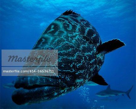 Fish and shark swimming underwater