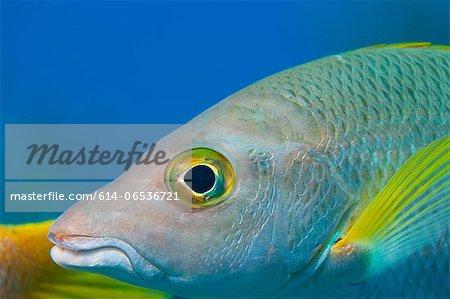 Close up of fish swimming underwater