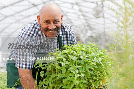 Mature man holding plants in garden centre, portrait