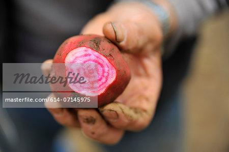 Man holding a turnip