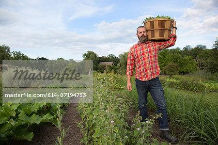 Mature man holding basket of leaves on herb farm