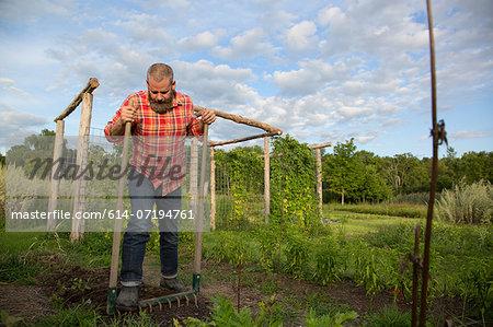Mature man raking soil on herb farm