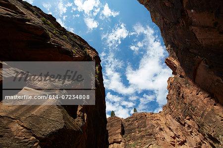 Virgin narrows looking up, Zion National Park, Utah, USA